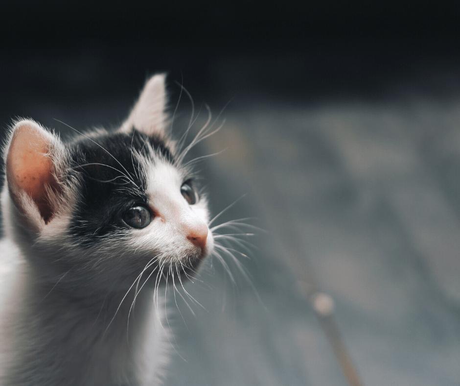 curiosity_cat